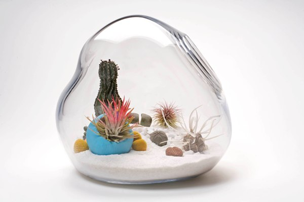 Post image for desert terrariums