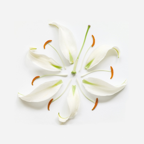 lily-exploded-museo-portfolio-rag-A3