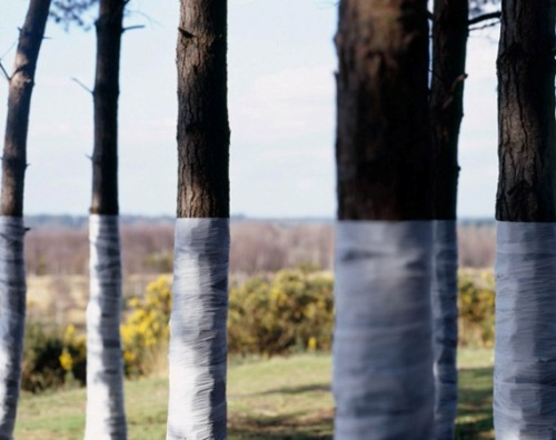 Post image for Tree, Line