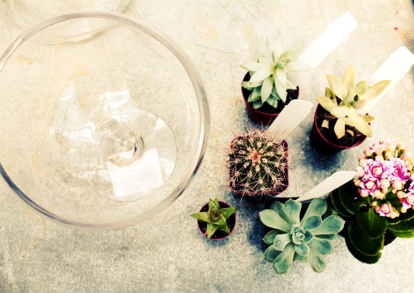 Post image for DIY Terrariums with
