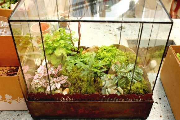 diy terrariums with terrain. Black Bedroom Furniture Sets. Home Design Ideas