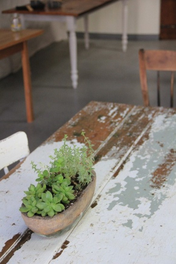 Single Plant on Vintage Wooden Table