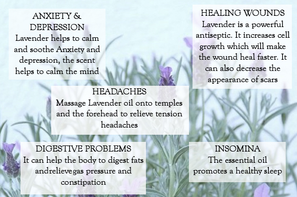 Post image for Beauty: Do you know how many benefits Lavender has?