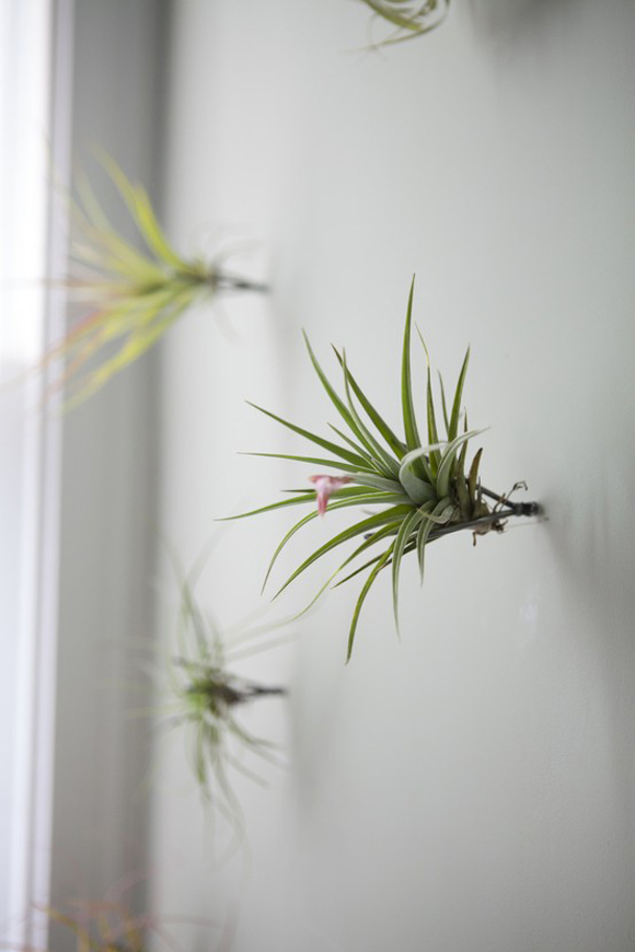 Post image for Décor Crush: Air Plants