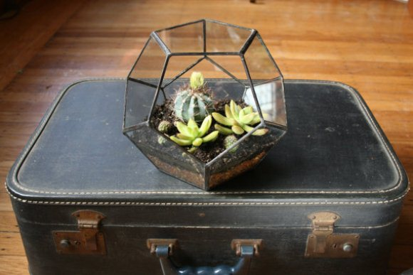 Geometric Terrarium on Suitcase