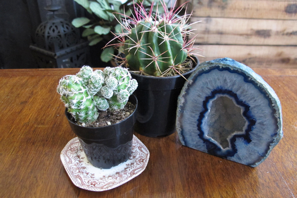 Post image for Why I've Fallen In Love With Cacti
