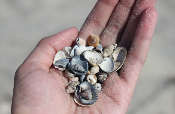 mini seashells
