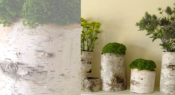 Birch Flower Pots