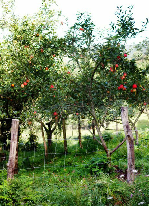 Thumbnail image for Saturday DO: Explore An Orchard