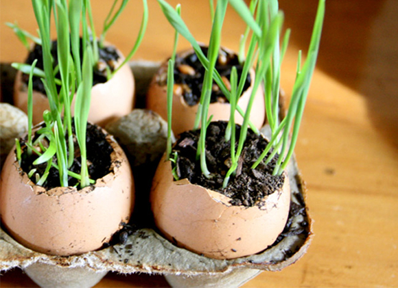 Post image for Saturday DO: Be Less Freaked Out By Wheatgrass