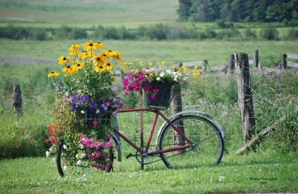 bike and flowers