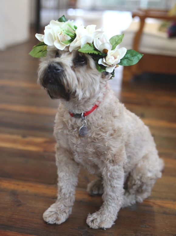 flower crown dog