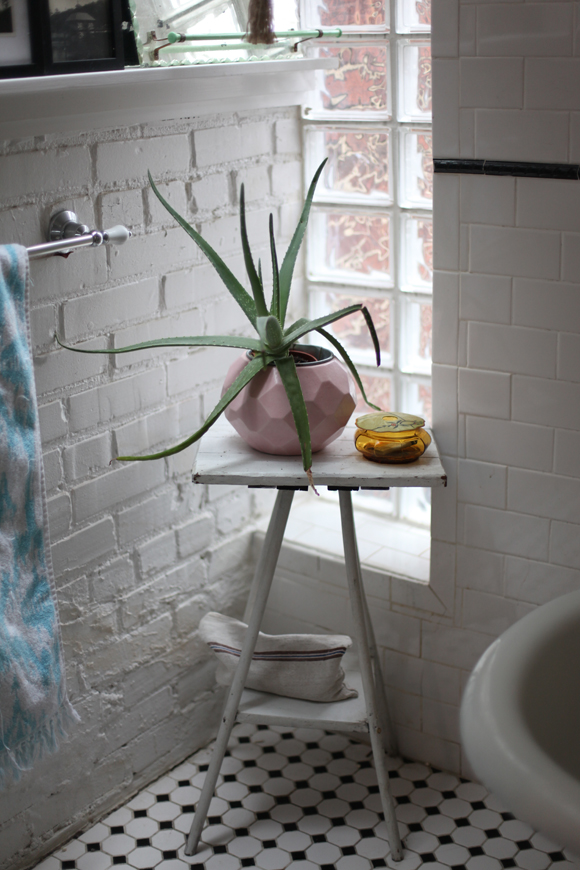 Aloe Plant in Bathroom