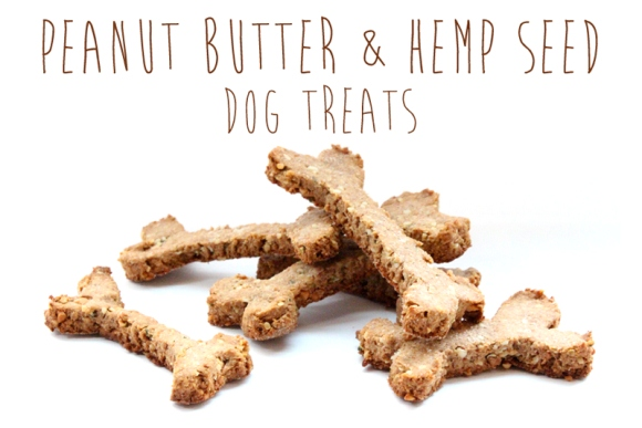 Post image for Recipe: Peanut Butter & Hemp Seed Dog Treats