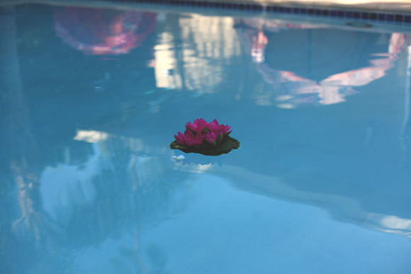 pool floating lily pad