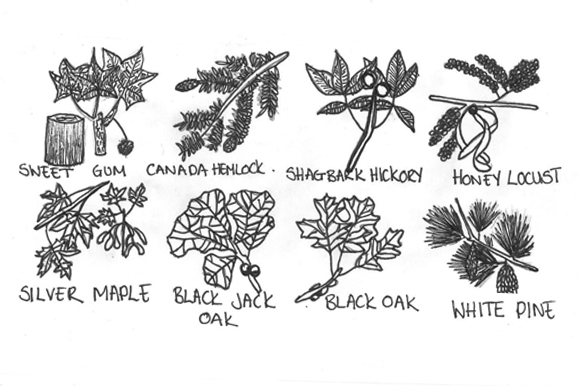 Post image for How To Identify Trees