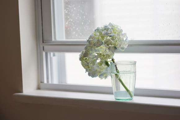 hydrangea in glass of water on windowsill