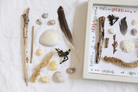 Post image for DIY Beach Specimen Shadow Box