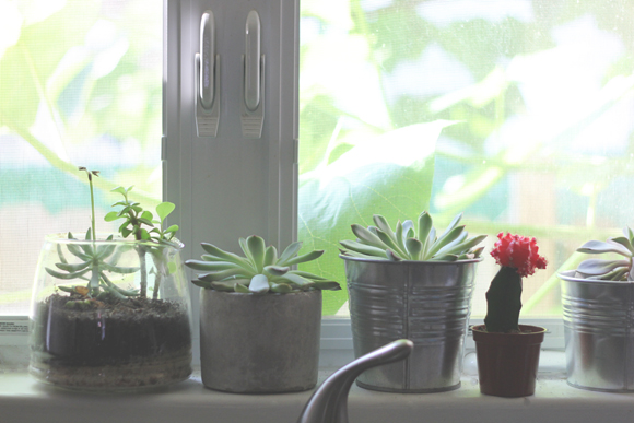 Succulents on kitchen windowsill