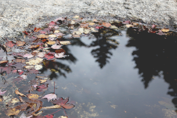 Leaves in water, tree reflection