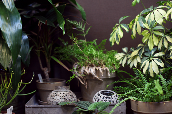 Post image for Plant Shop I Love: City Planter