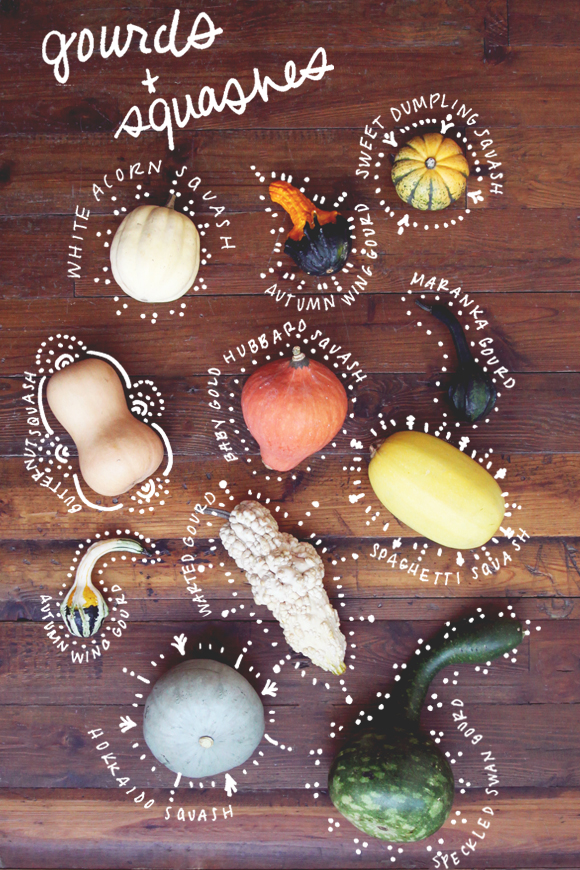 Types of gourds and squashes