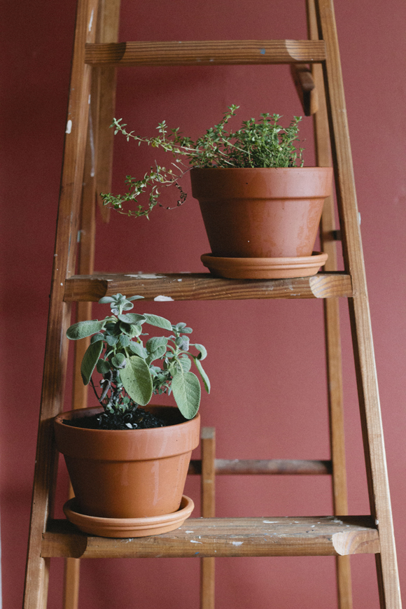 Post image for Step By Step: Moving Your Plants Indoors For Winter