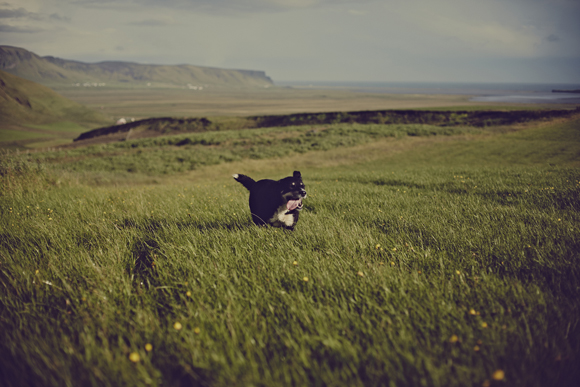 puppy running in the hills