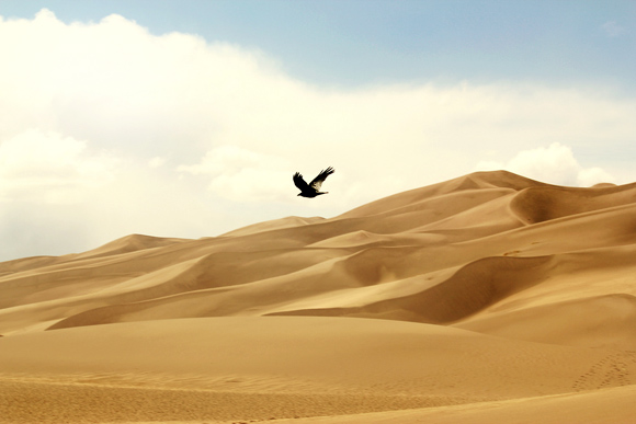 southern sand dunes