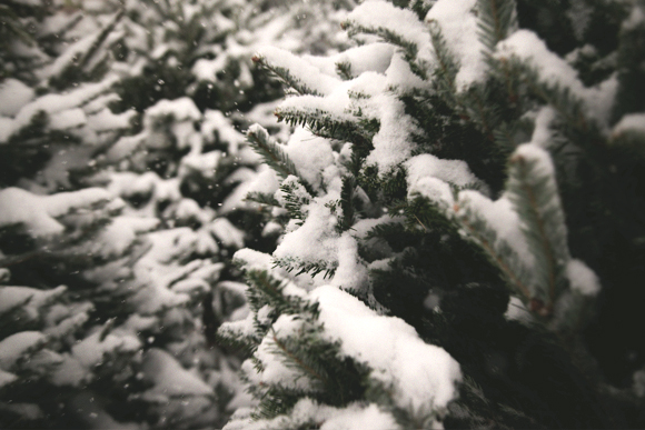 close up of christmas trees