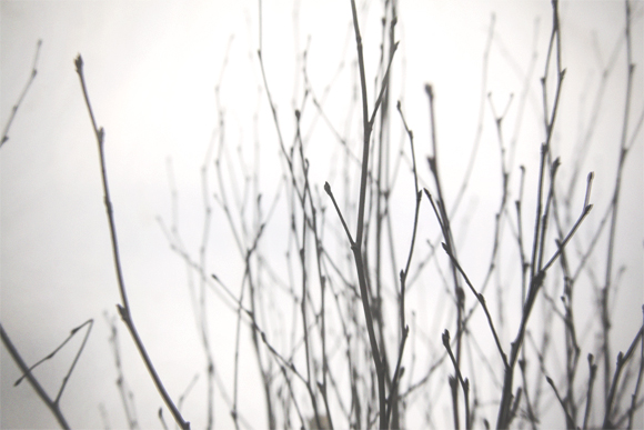 close up of twigs