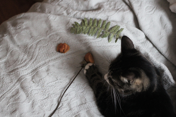 Cat, paw, dried flowers