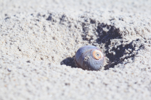 little seashell