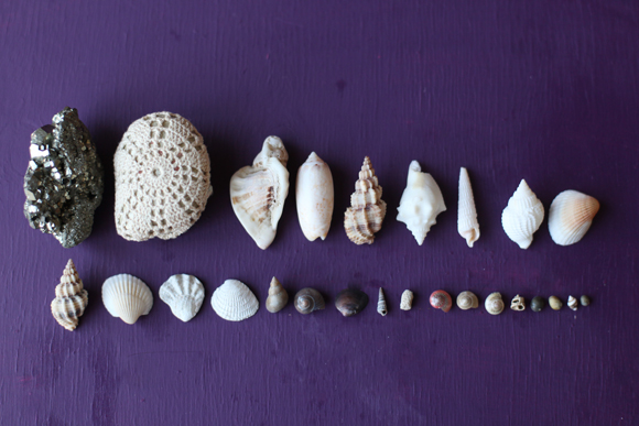 Shells on purple
