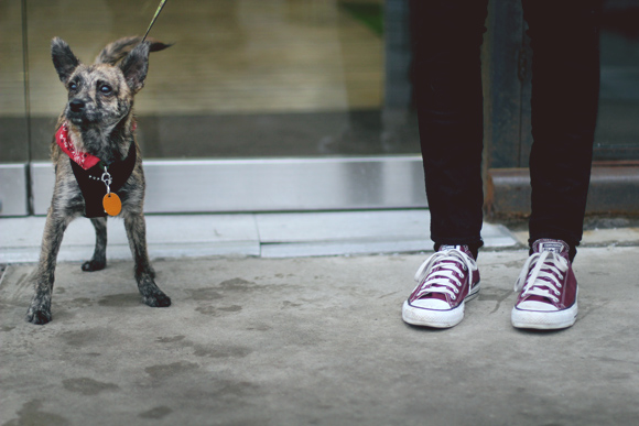 pup and converse
