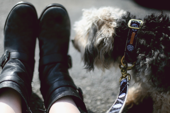 pup and shoes