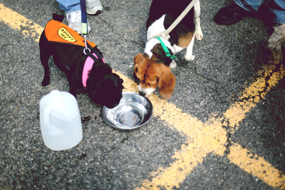 pups drinking water