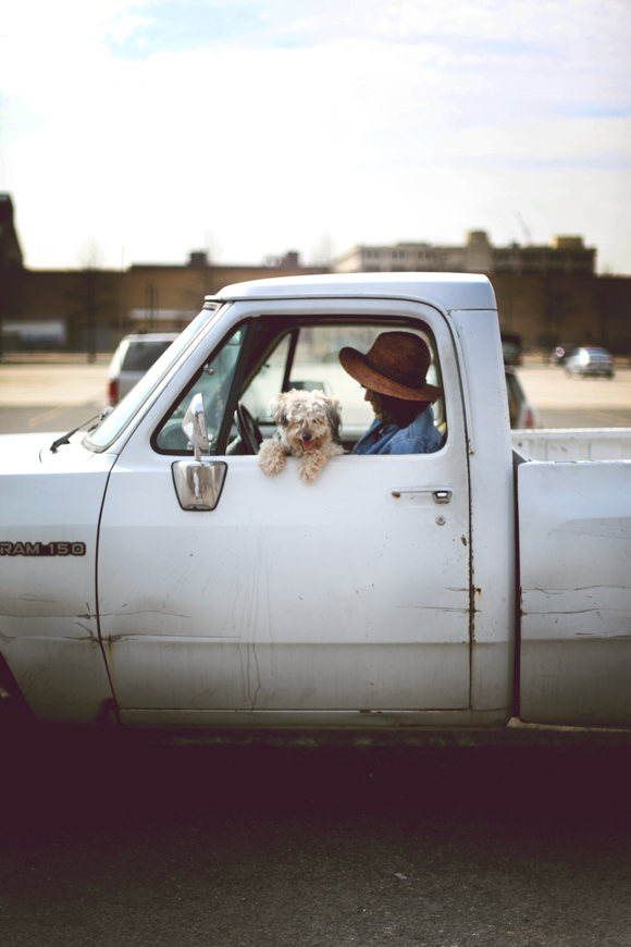pup in the truck