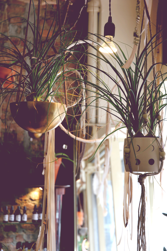 hanging wall plants