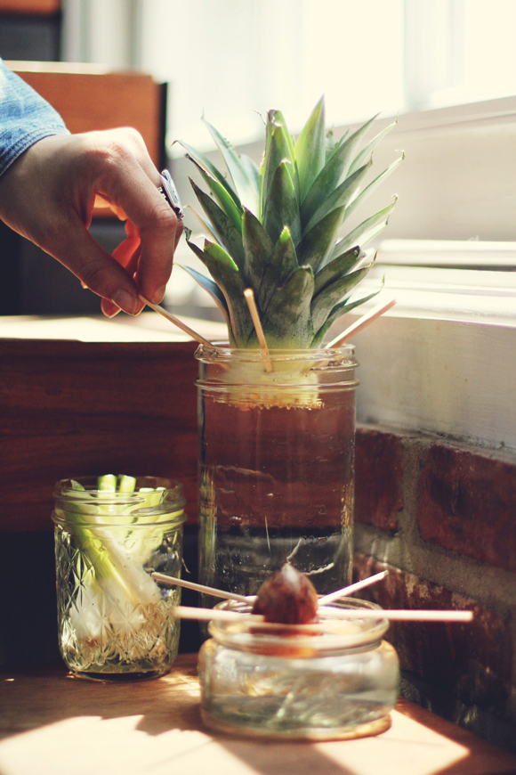 regrow food from scraps