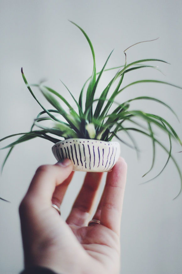 holding air plant
