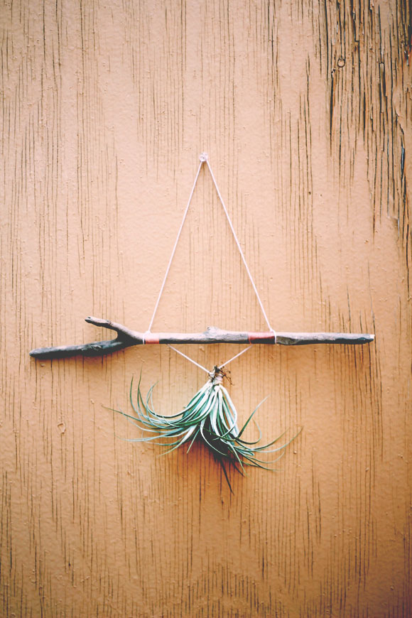 Post image for Decor Inspiration: Decorating With Air Plants