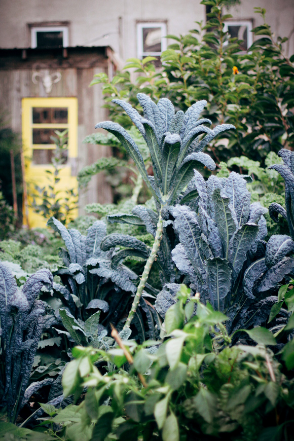 kale trees and yellow door