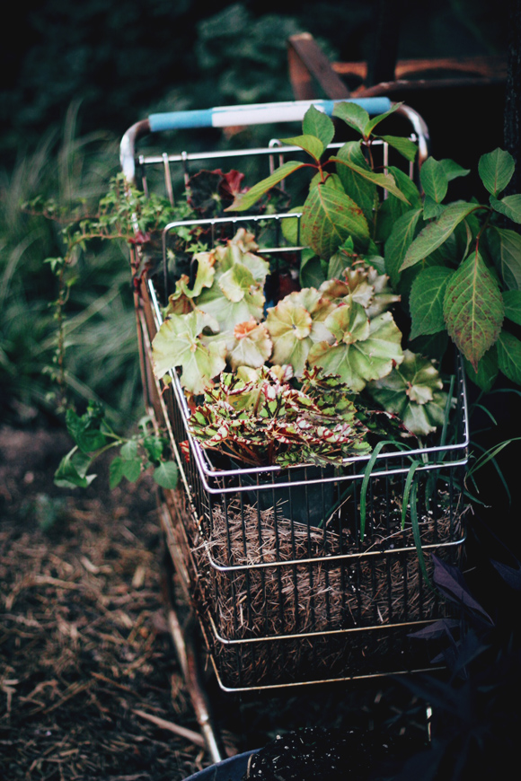 shopping cart with plants