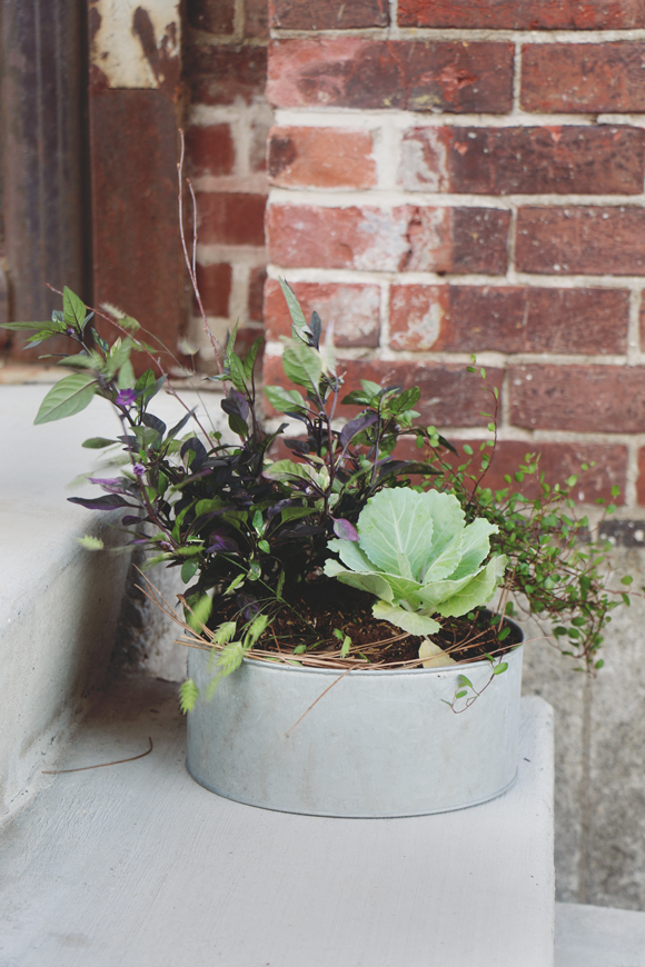 Post image for Fall Container Planting DIY With Terrain