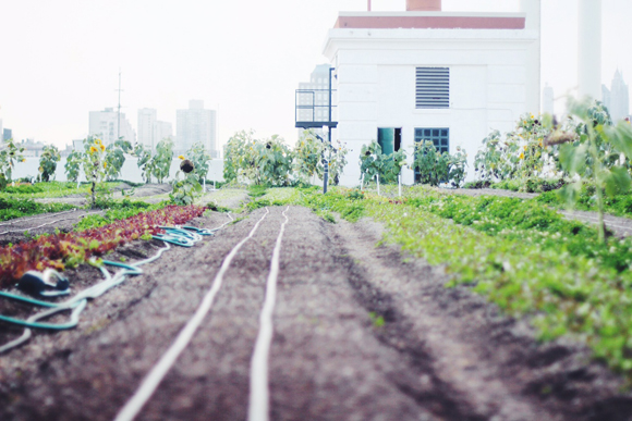 brooklyn grange rooftop farm