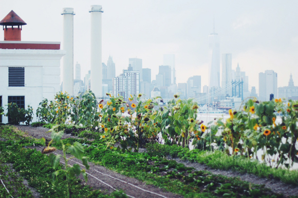 Post image for Brooklyn Grange: A Rooftop Urban Farm