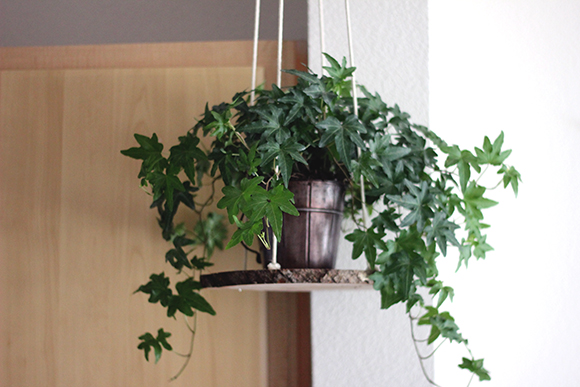 Post image for DIY Hanging Plant Holder