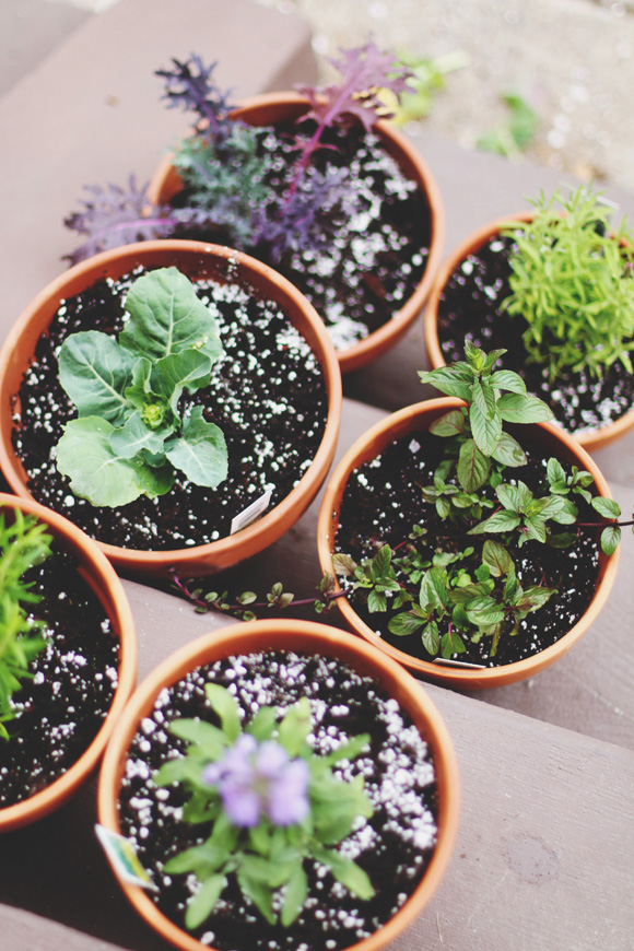 Post image for Grow Where You're Planted: Tips For Small Space Gardening