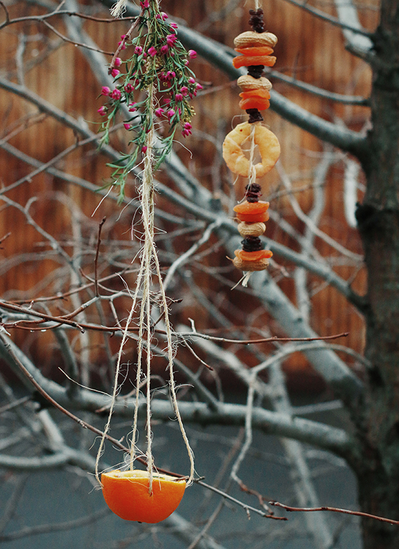 Post image for Care for Your Local Wildlife With These Homemade Bird Feeders
